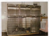 Arnold & Carlton Veterinary Practice - Lab Picture