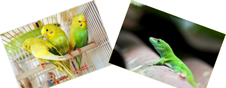Arnold & Carolton Vets In Nottingham - Parrot & Lizard I